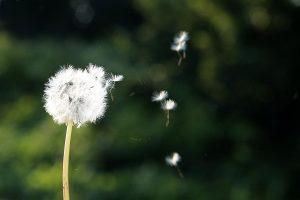 Frische Luft wie in der Natur sollte auch im Haus vorherrschen.